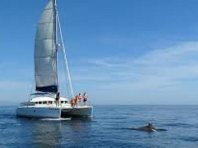 Catamaranes Estepona