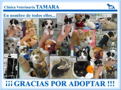 Tamara Veterinary Clinic